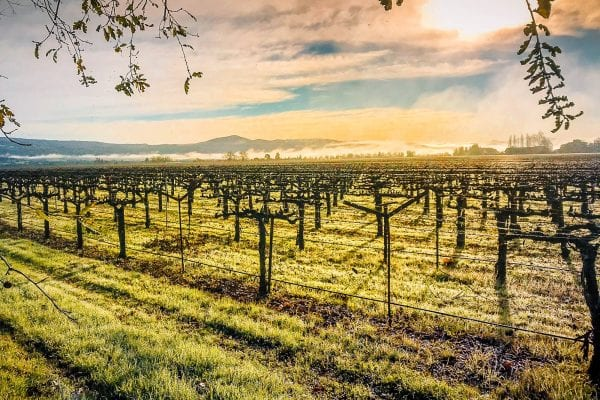 Napa County Groundwater Sustainability Planning